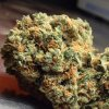 green-crack-marijuana-strain-31.jpg
